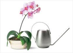 Как поливать орхидеи правильно в домашних условиях