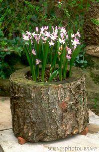 Горшок для цветов из старого пня