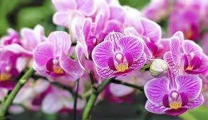 Средства для подкормки орхидей
