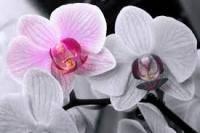 Все о уходе за орхидеей после цветения