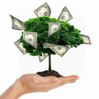 Все о правильном поливе денежного дерева