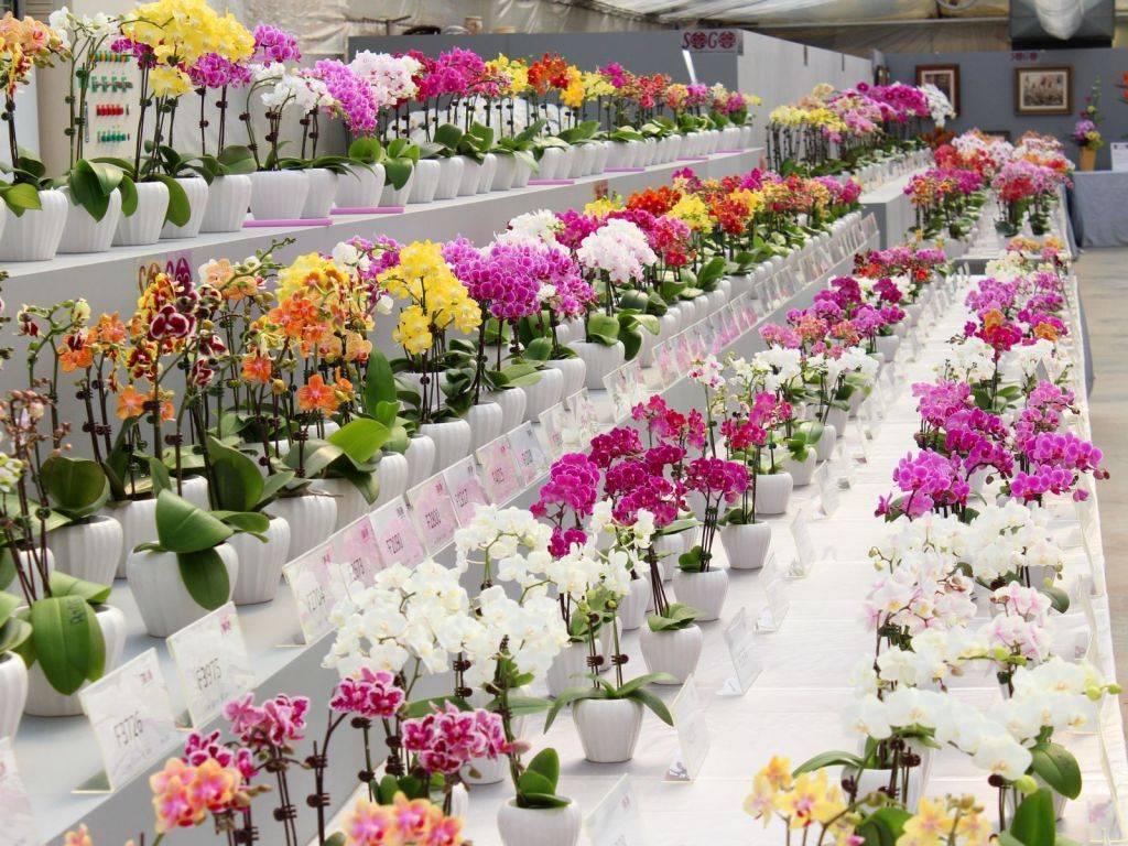 Какие есть цветы в магазине
