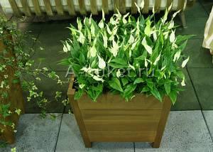 При правильном уходе красота растения просто невообразима