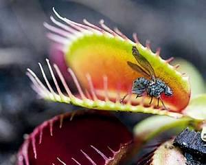 Кормите мухоловку насекомыми по размеру