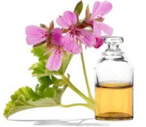 Цветок герани и его лечебные свойства