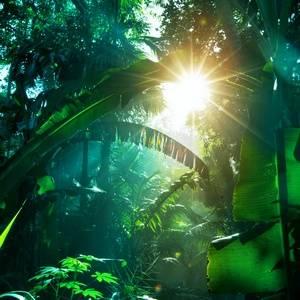 Тропики, родина растения монстеры