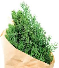 Пряная зелень укропа очень полезна