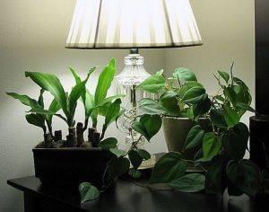Теневыносливые комнатные растения в интерьере