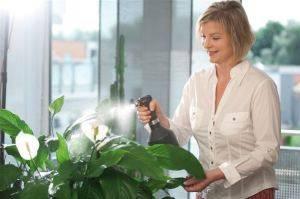 Применение Эпина для комнатных растений