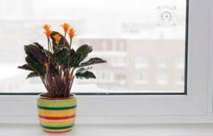 Температура - важный фактор для комнатных растений