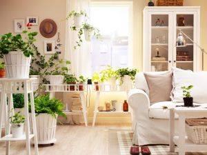 Своевременный и правильный уход за комнатными растениями