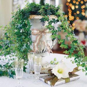 Вьющиеся комнатные растения - английский плющ