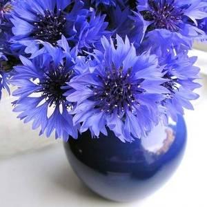 Разнообразие синих цветов в комнатном цветоводстве приятно удивит