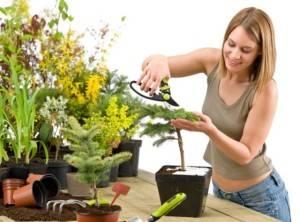 Инструменты для ухода за комнатными растениями