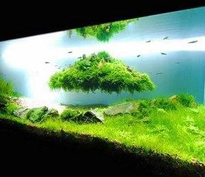 Плавающие растения в аквариуме создадут уют в нем