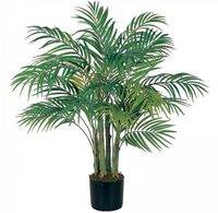 Секреты ухода за пальмой арекой в домашних условиях