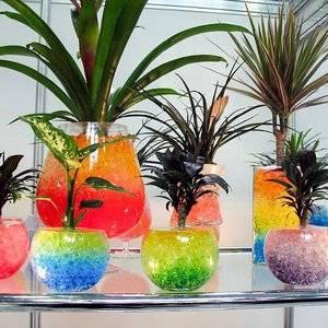Гидрогель используют в декоративных и профессиональных целях