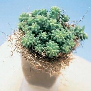 Неприхотливые комнатные растения находка для начинающих садоводов