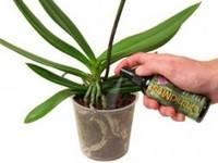 Секреты подкормки фаленопсиса в домашних условиях