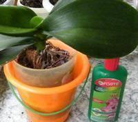 Лучшие удобрения для подкормки орхидей
