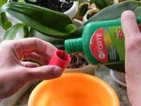 Как правильно удобрять орхидеи - рекомендации цветоводов профессионалов