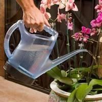 Различные методы полива фаленопсиса на видео