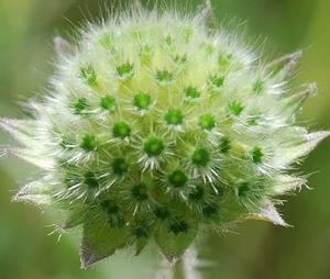 Комнатные цветы с зелеными цветками - топ коллекция