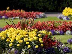 Цветы на клумбе во сне