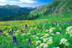 Цветы в поле во сне