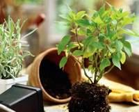 Делаем дренаж для комнатных растений