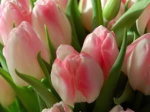 Букет из тюльпанов во сне