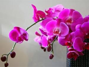 Орхидеи во сне
