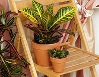 Выбираем теневыносливые растения для дома