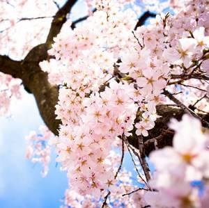 Цветущие деревья значение во сне