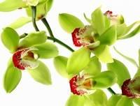 Узнайте, как ухаживать за орхидеями после цветения