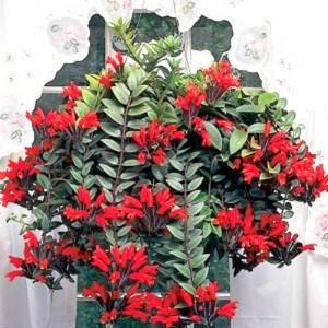 Эсхинантус порадует обильным цветением