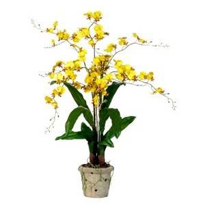 Онцидиум относится к роду орхидей