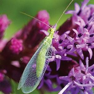 Биологические средства борьбы с растениями