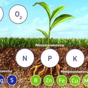 Питание имеет важную роль для растения