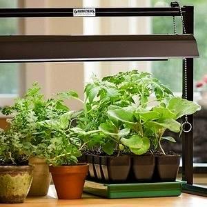 Недостаток света приводит к остановке роста растений