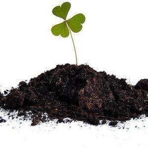 Почва должна обладать необходимым уровнем кислотности