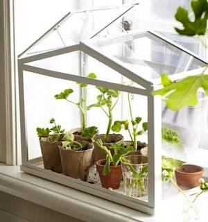 Комнатная тепличка на окне
