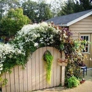 Благоустройство дома включает создание цветников