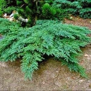 Засухоустойчивые растения