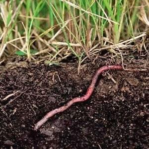 Гумус это полезный слой почвы