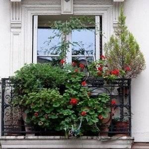 Хвойные растения могут расти на балконе