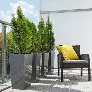 Хвойные растения украшают балкон