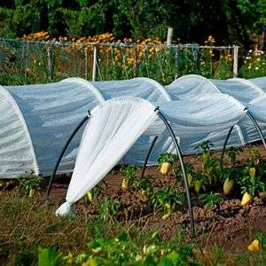 Овощи выращивают в парниках