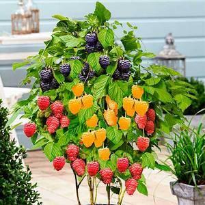 Овощи можно выращивать на балконе