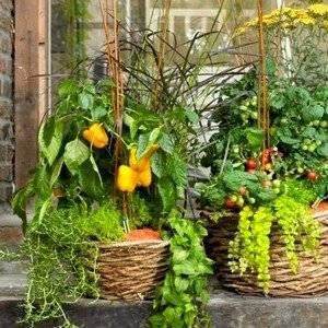 Овощи на балконе растут по сезону